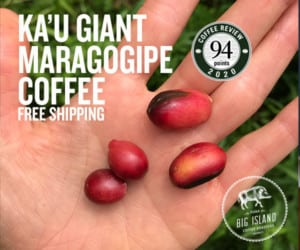Shop for 94-point Ka'u Maragogipe at Big Island Coffee